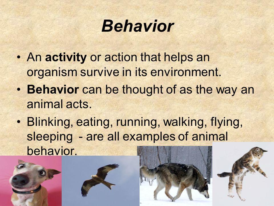 animal behavior innate and learned behaviors. behavior an activity