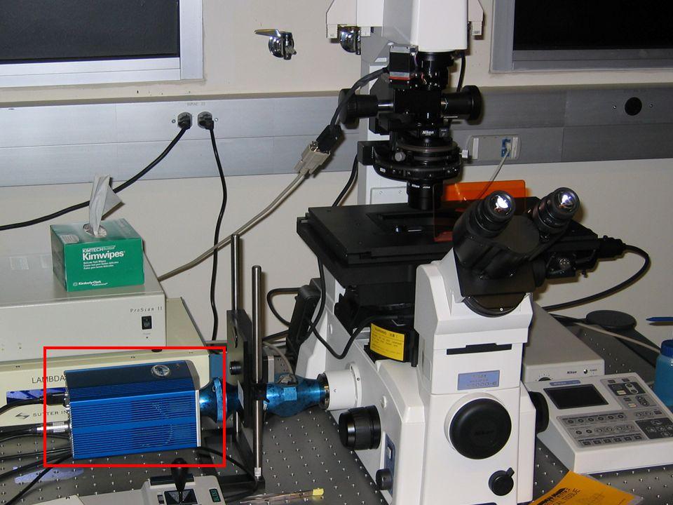 Digital Cameras in Microscopy Kurt Thorn Nikon Imaging QB3