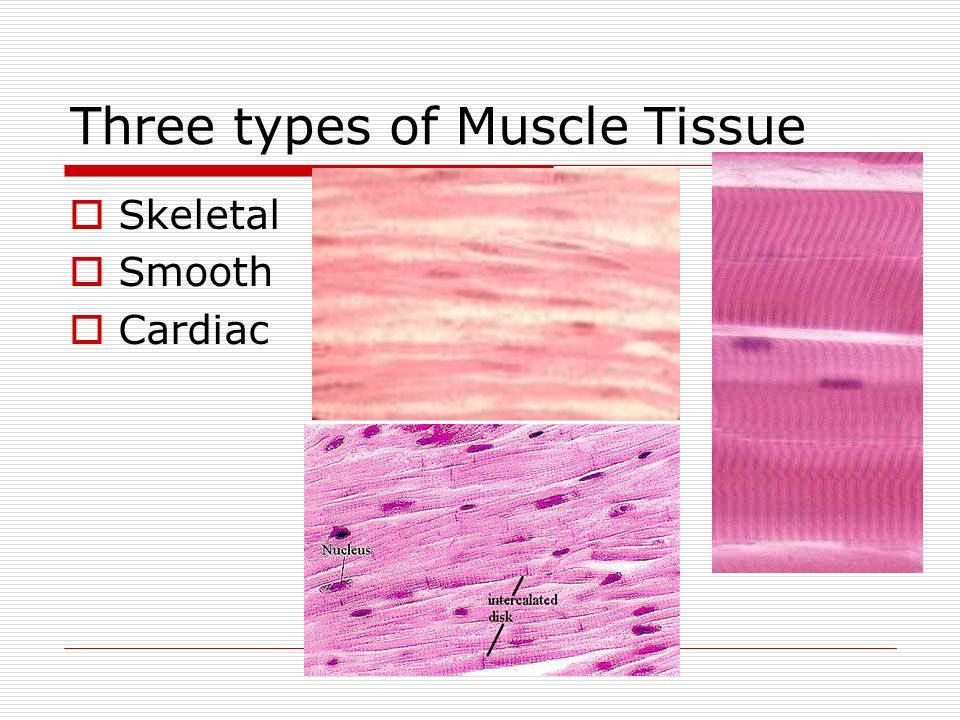 Muscular System Chapter 9 Three Types Of Muscle Tissue Skeletal