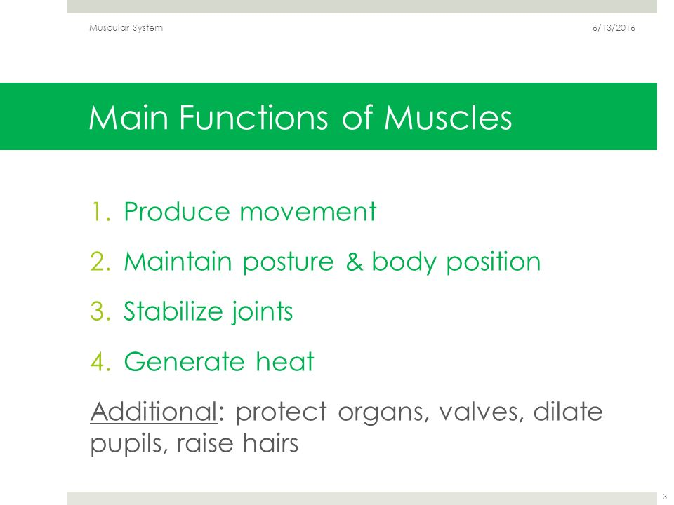 Top Five What Are The Three Main Functions Of The Muscular System