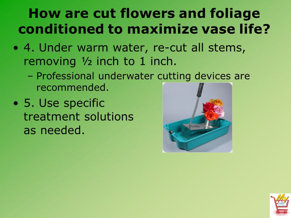Horticulture Science Lesson 55 Caring For Fresh Cut Flowers And