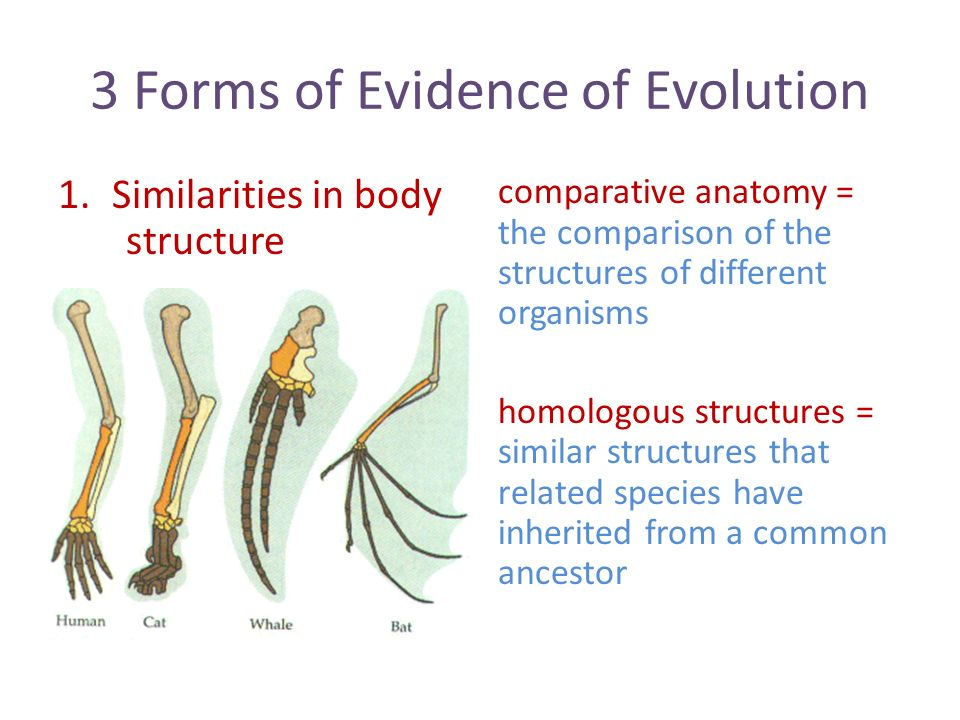 Chapter 7 Section 2 Evidence of Evolution. 3 Forms of Evidence of ...