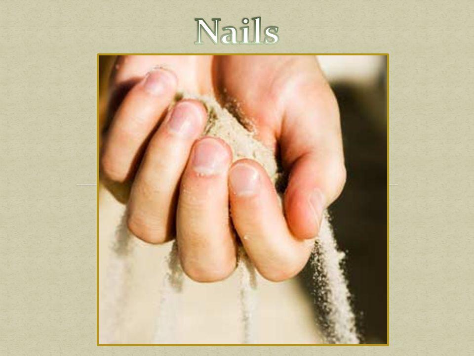 Nail Plate – Hard portion. Most visible. Lunula - whitish, half-moon ...