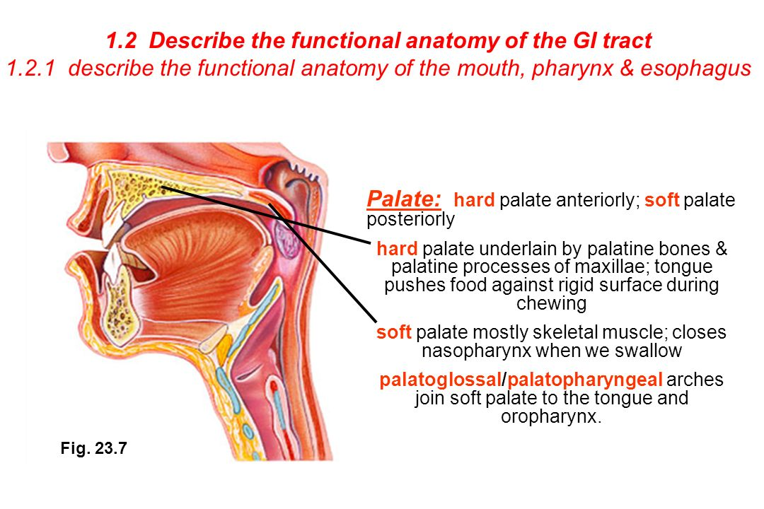 This Course Will Explore The Anatomy And Physiology Of The Endocrine