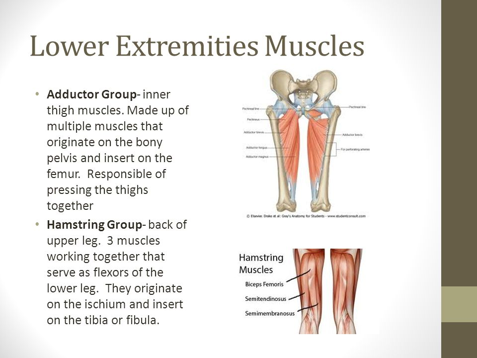 MUSCLES. 3 main categories of muscles : Smooth- Another name is ...