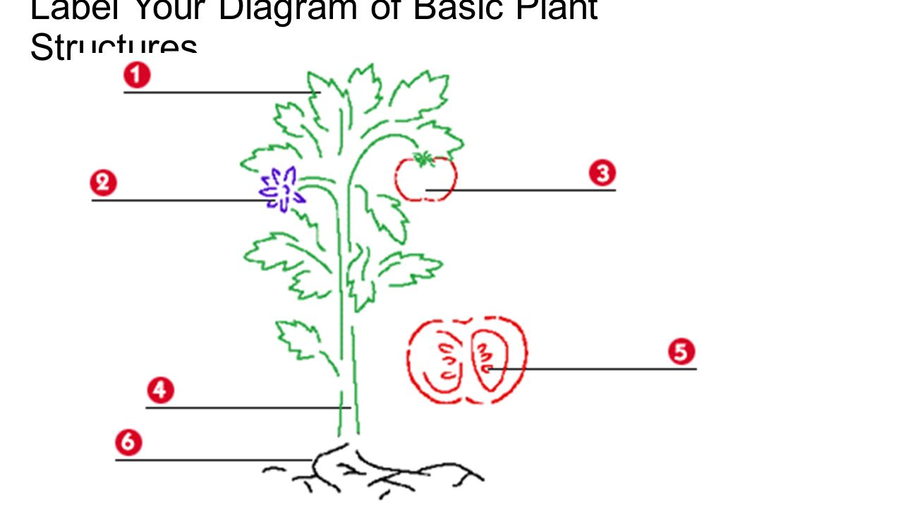 basic structures of a flowering plant roots:the plant part that