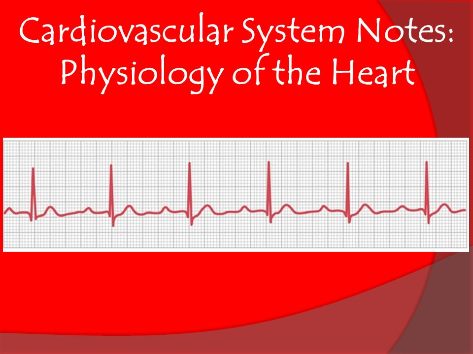 Cardiovascular System Notes: Physiology of the Heart. - ppt download