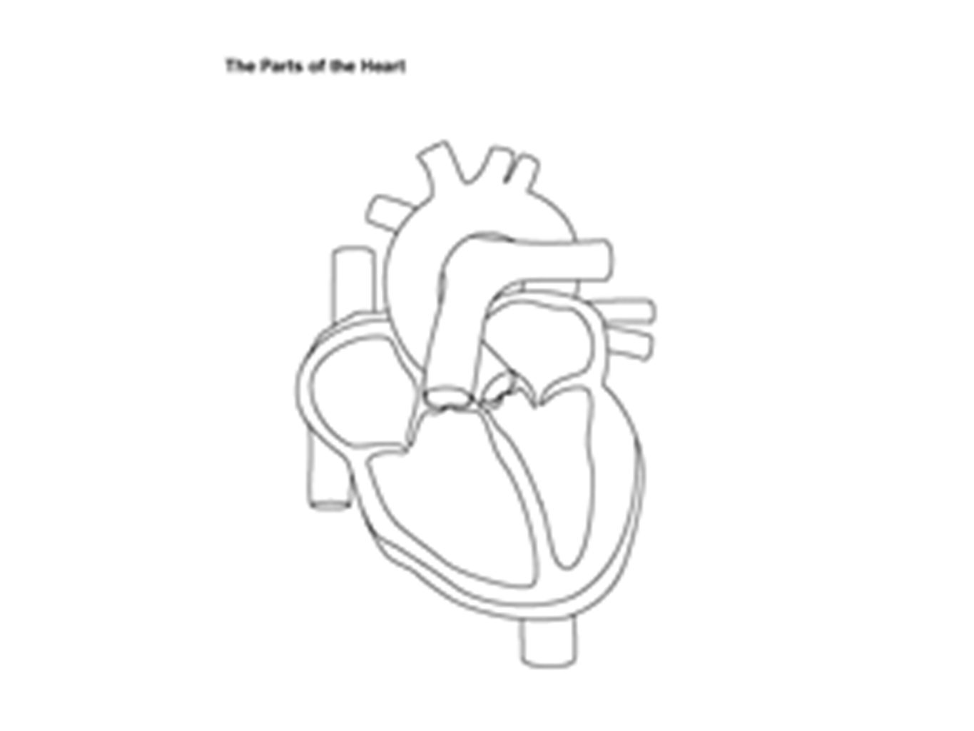 B2 Topic 3 Starter Stick In The Heart Diagram Ppt Video Online