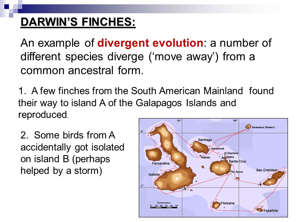 What Is Speciation How New Species Evolve From Old Ones Section