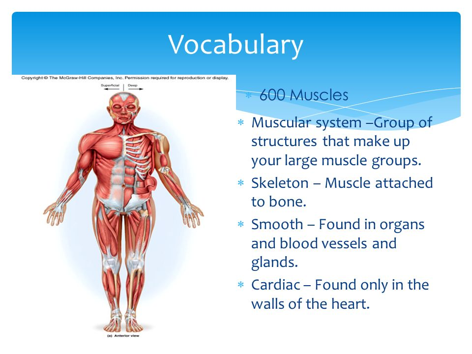 Muscular Systems Health Workbook Body Systems.  Identify and ...
