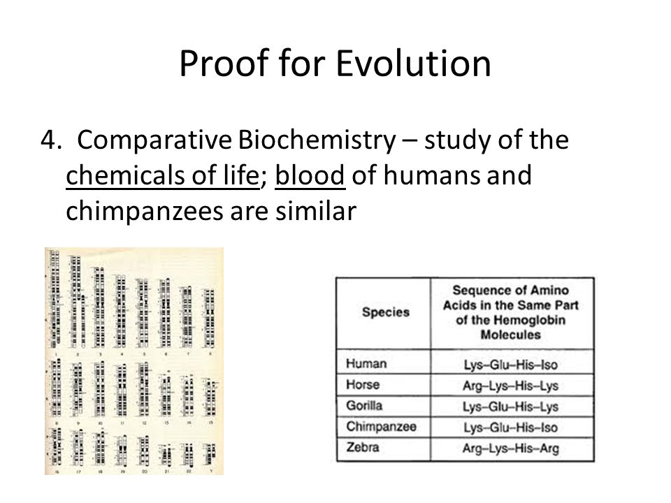 Proof for Evolution 4.