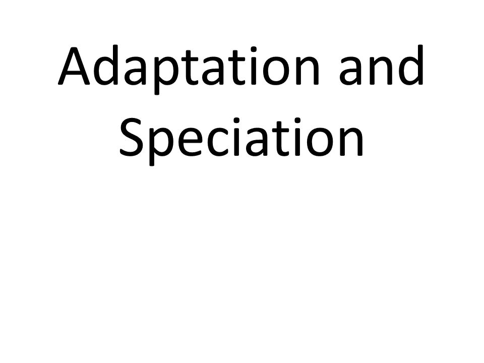 Adaptation and Speciation