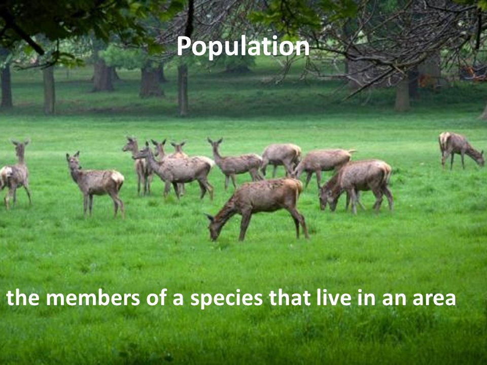 Population all the members of a species that live in an area
