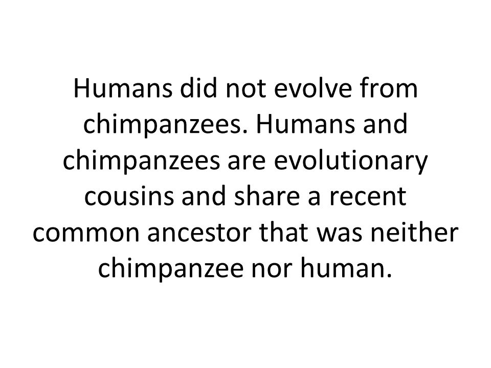 Humans did not evolve from chimpanzees.