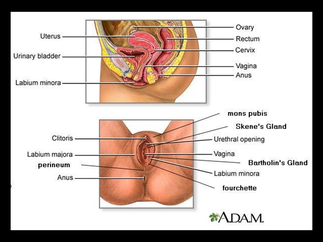 Overview of female reproductive system cancers