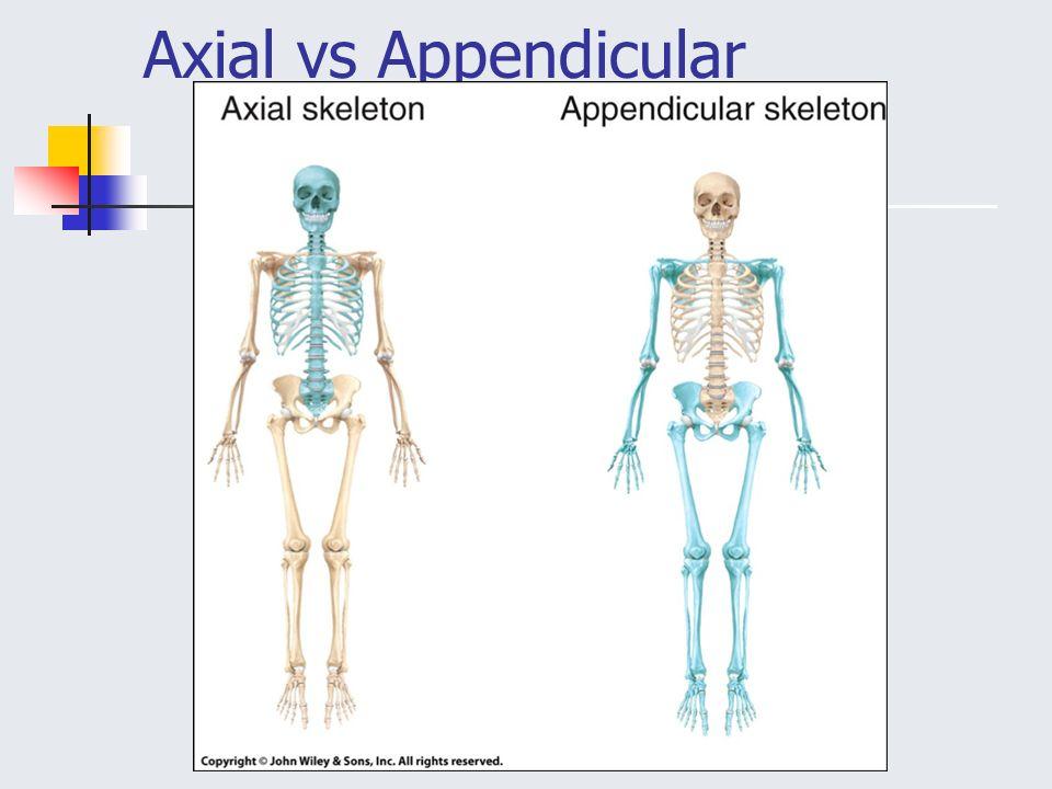 axial vs appendicular