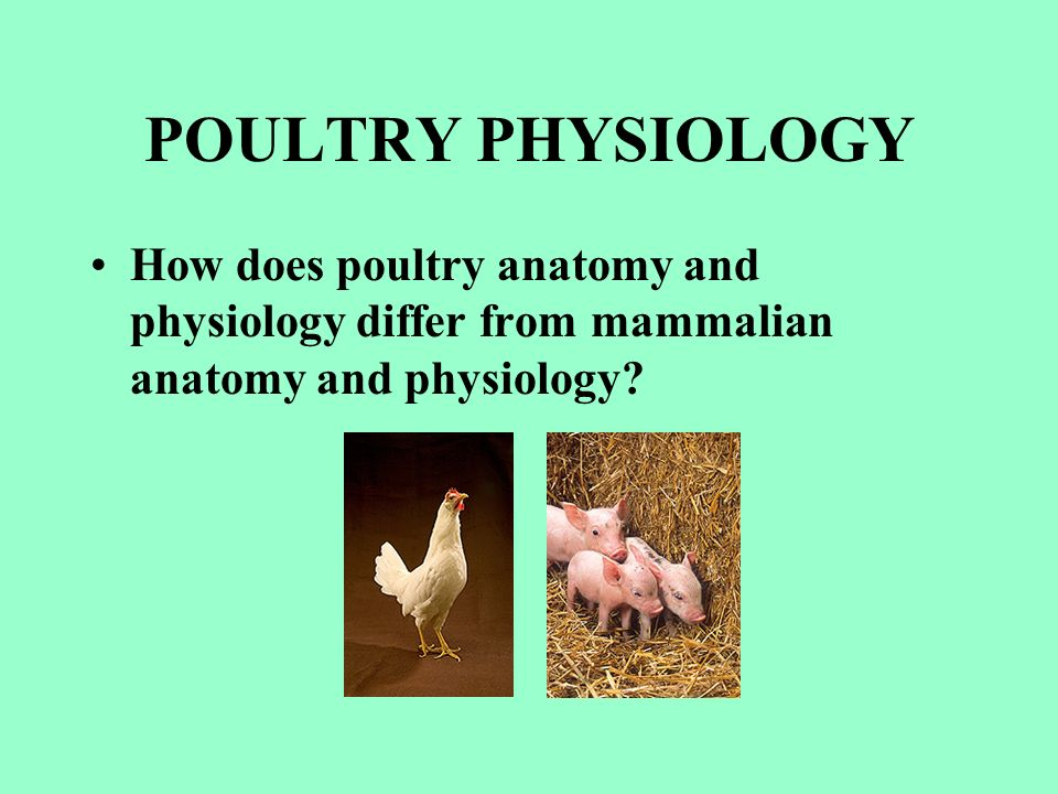 Introduction to Animal Science POULTRY Lecture 1 Dr. Jacquie Jacob ...