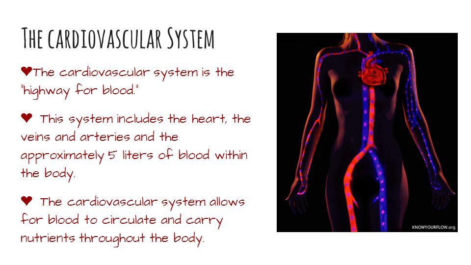 The Cardiovascular System Catherine Walker Mikaela Echegaray