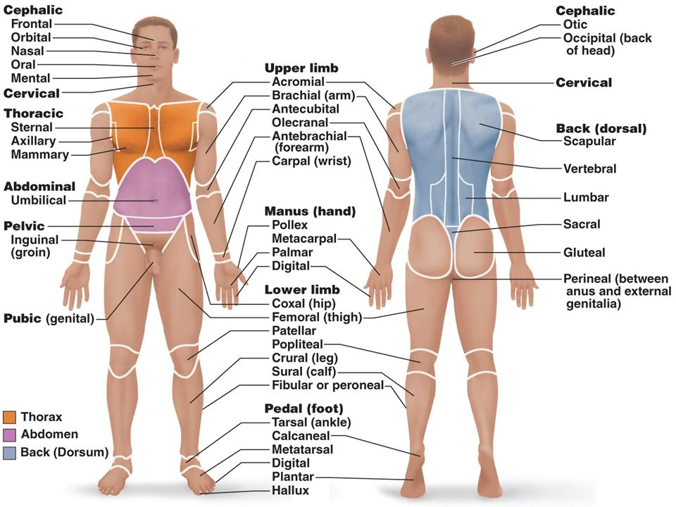 The Language Of Anatomy Ppt Video Online Download