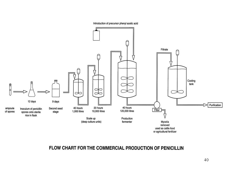 secondary metabolites ppt video online download rh slideplayer com Process Flow Chart Engineering Process Flow Diagram