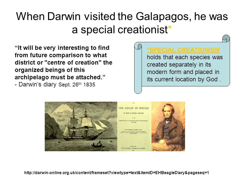 The Giant Tree Cacti Of The Galapagos Islands Struck Charles Darwin