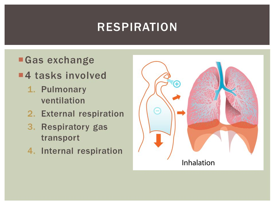 a study of phases of pulmonary ventilation Study these flashcards kentucky murray state university chapter 14 dynamics of pulmonary little influence on exercise ventilation except for extreme hyperthermia phase 1 of integrated an abrupt decline in ventilation reflects removal of central command and input from receptors in active.