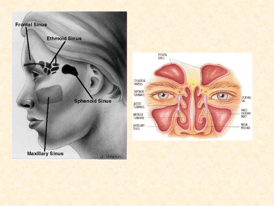 ANATOMY OF NOSE,NASAL CAVITY&PARANASAL AIR SINUSES - ppt video ...