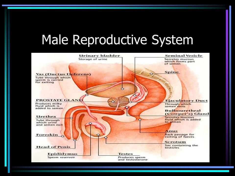 neurontin urinary retention