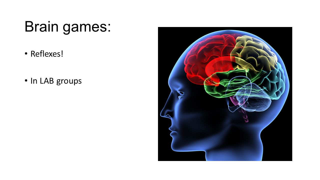 Nervous System dlpaWi3rc /brain- games/?gclid=CMLusMPhpMsCFUiGfgo ...