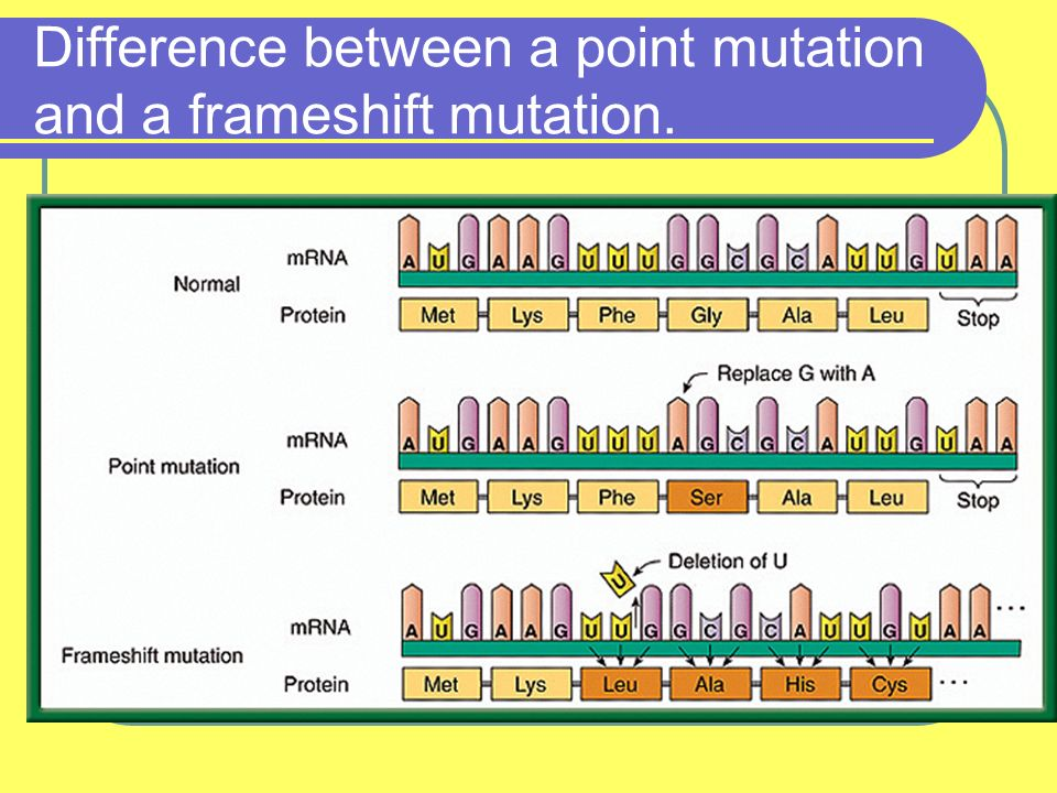 Mutations. I. Mutations -any change in DNA sequence (order of ...