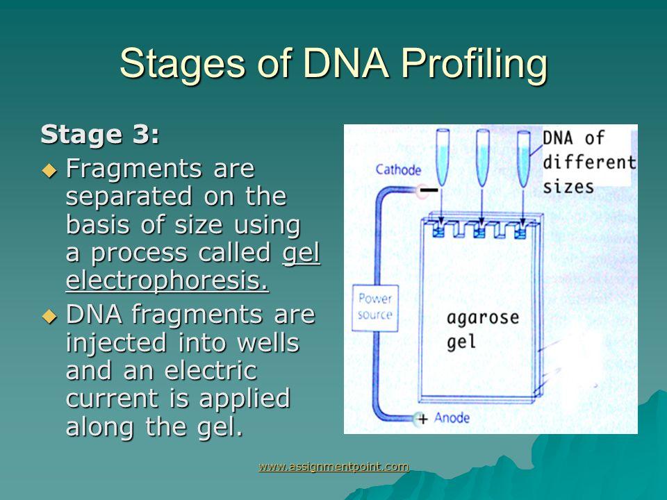 dna profiling dna fingerprinting ppt download