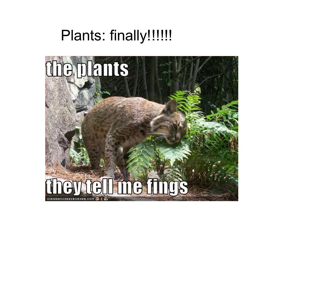 Plants: finally!!!!!!. Chapter 35: Plant Anatomy -emphasis on ...