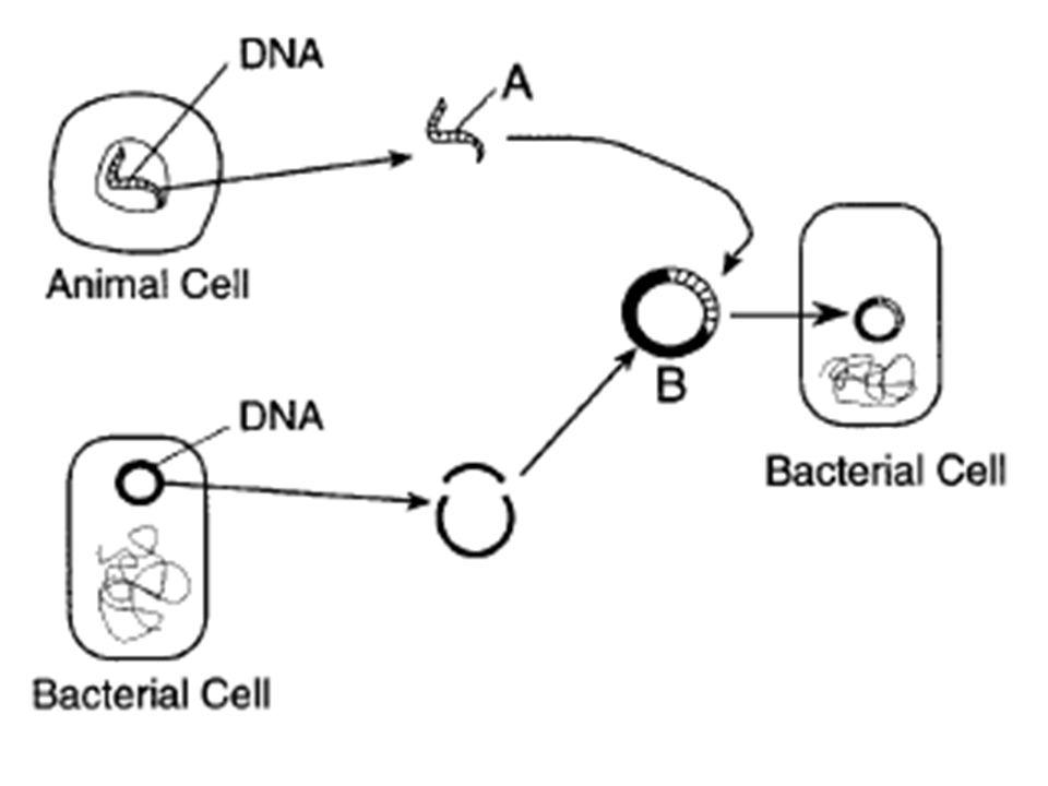 Genetics Segments Of A Chromosome Dna That Provide Instructions