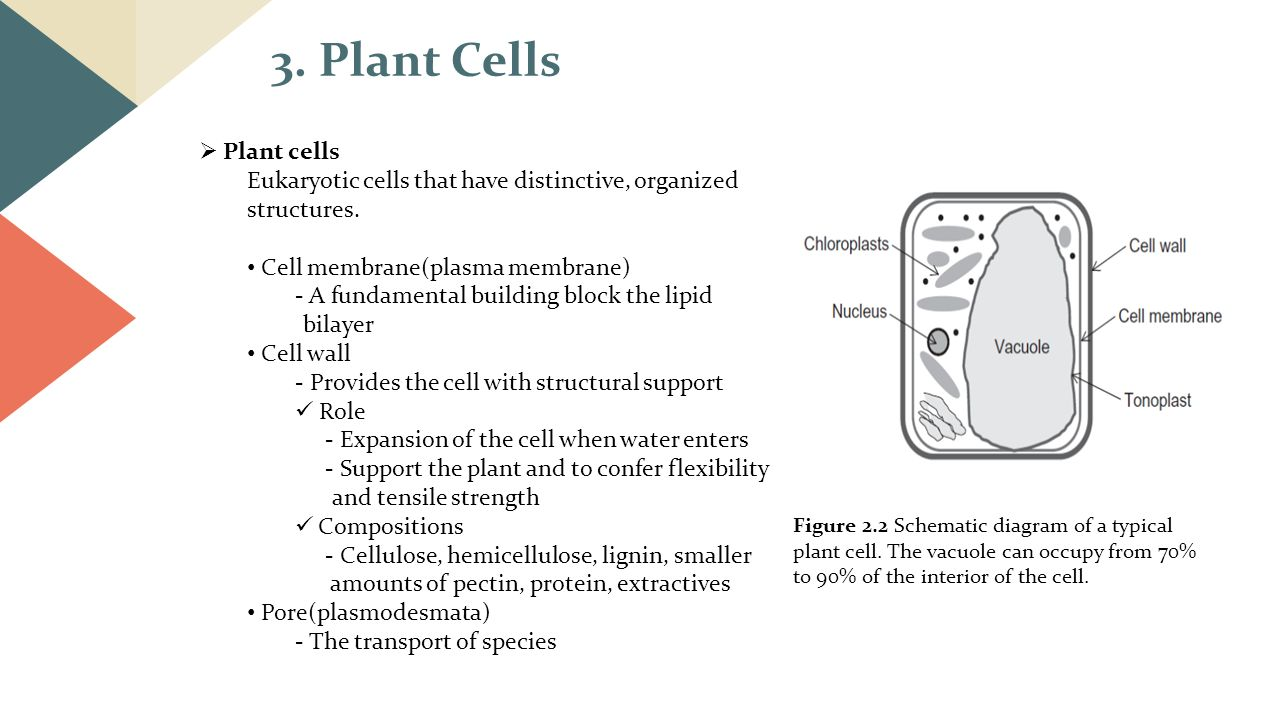 Schematic Diagram Of A Typical Plant Cell Wiring And Ebooks Cells Labeled Nanotechnology In The Agri Food Sector Supramolecular Structures Rh Slideplayer Com