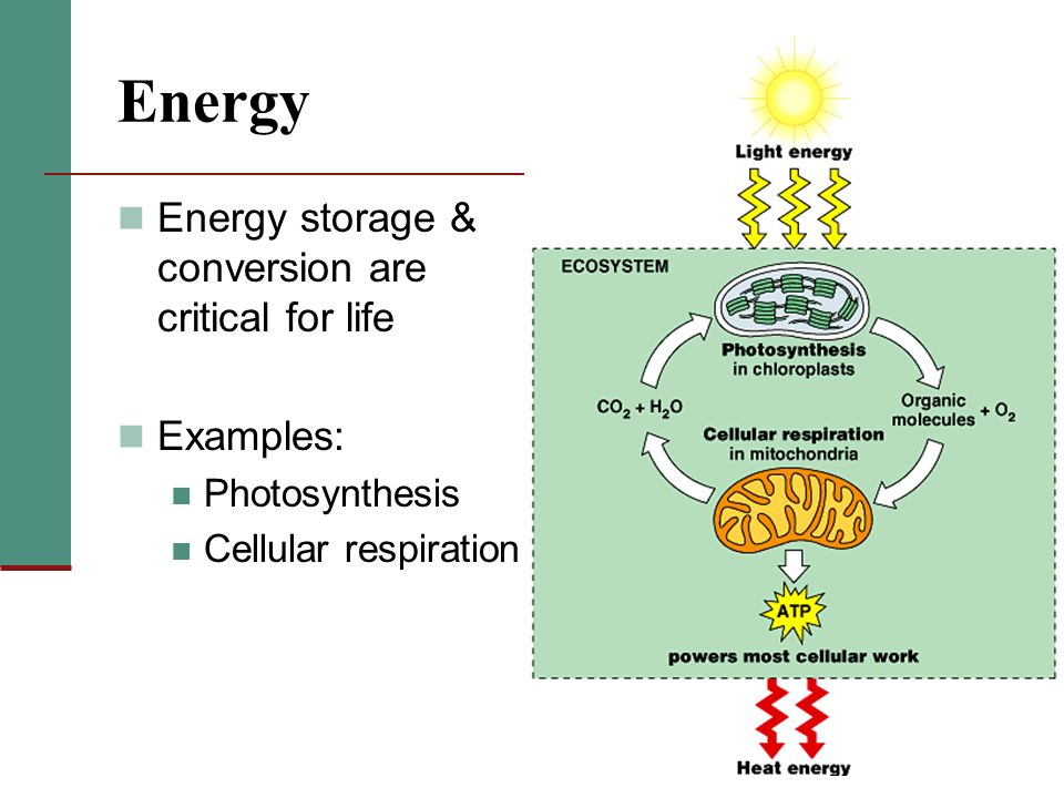 2 Energy Storage Conversion Are Critical For Life Examples Photosynthesis Cellular Respiration