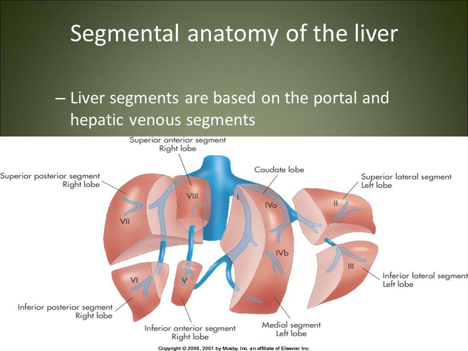Fine Liver Segment Anatomy Inspiration Human Anatomy Images