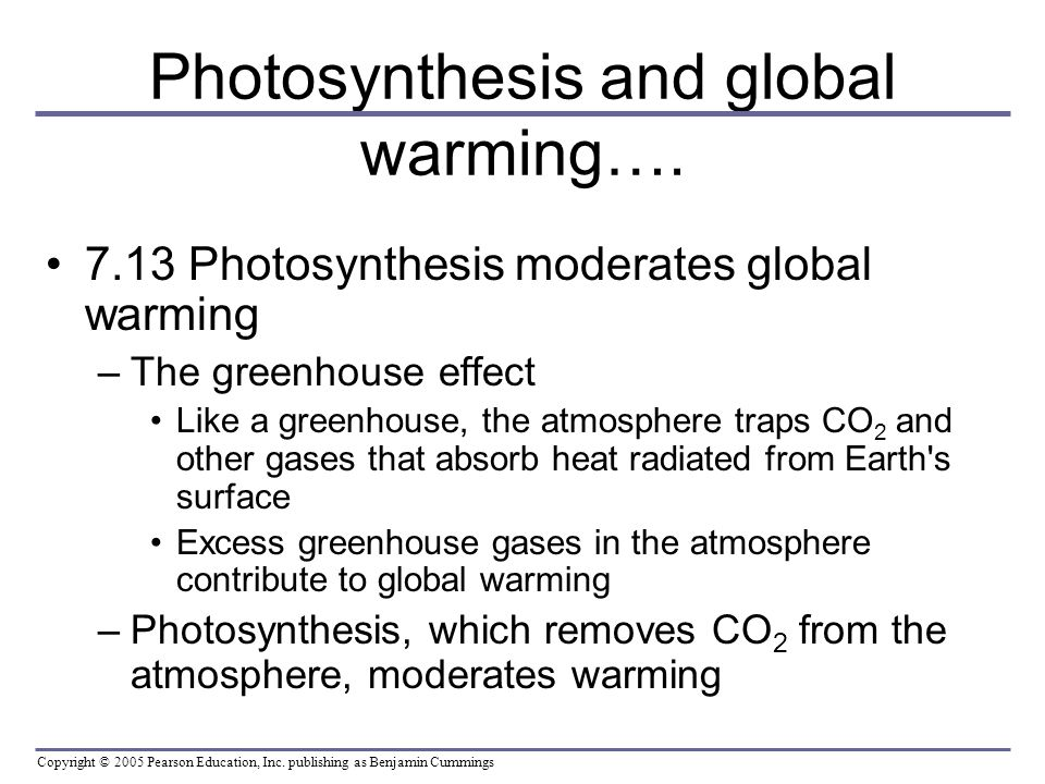 rotenone effects on phtosynthesis Bio 114 exam 2 study play  rotenone binds tightly with one of the electron carrier molecules in the electron transport chain, preventing electrons from passing to the next carrier molecle  global warming due to the greenhouse effect may be a) moderated by photosynthesis, which removes carbon dioxide from the atmosphere b) made worse.