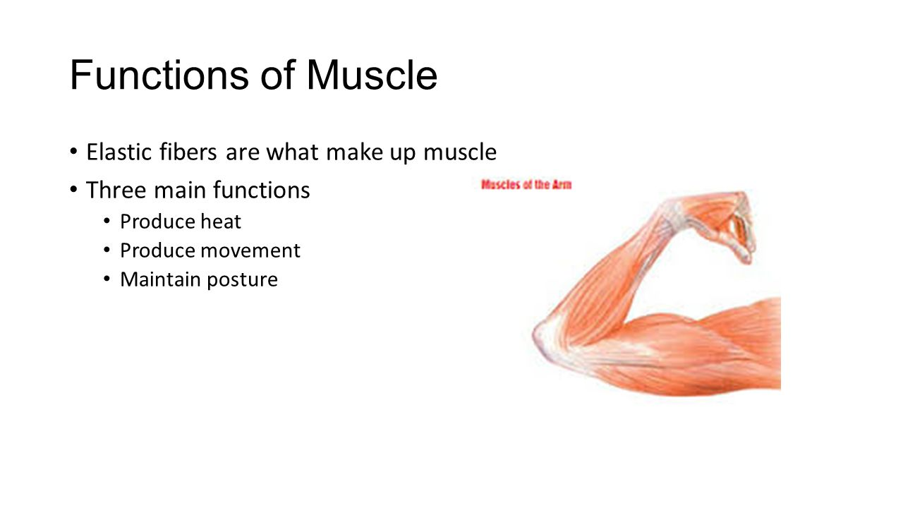 The Muscular System Explain The Difference Between Muscle And Bone