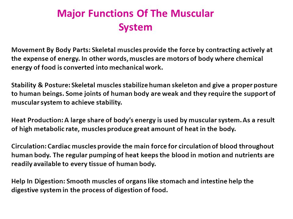 The Muscular System By Miriam Cantu  Nayeli Belmares  Ppt Download Major Functions Of The Muscular System Movement By Body Parts Skeletal  Muscles Provide The Force The Importance Of Learning English Essay also Literature Review Service Quality  How To Write A Essay Proposal