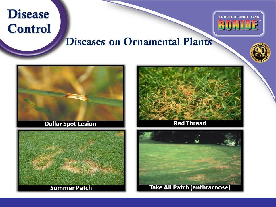 6 Diseases On Ornamental Plants Diseasecontrol