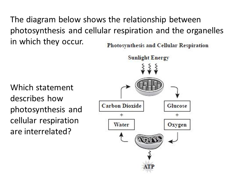 Global warming diagram photosynthesis cellular respiration photosynthesis and cellular respiration sc 912 l ppt download rh slideplayer com cellular respiration vs photosynthesis ccuart Image collections