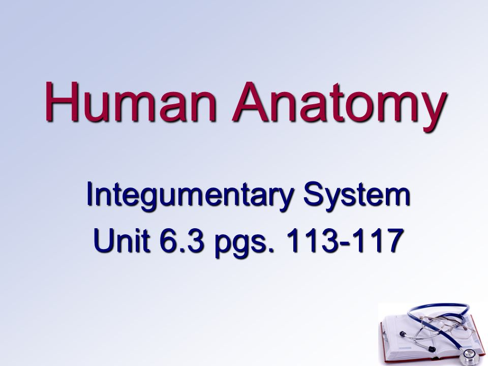 Human Anatomy Integumentary System Unit 63 Pgs Ppt Download