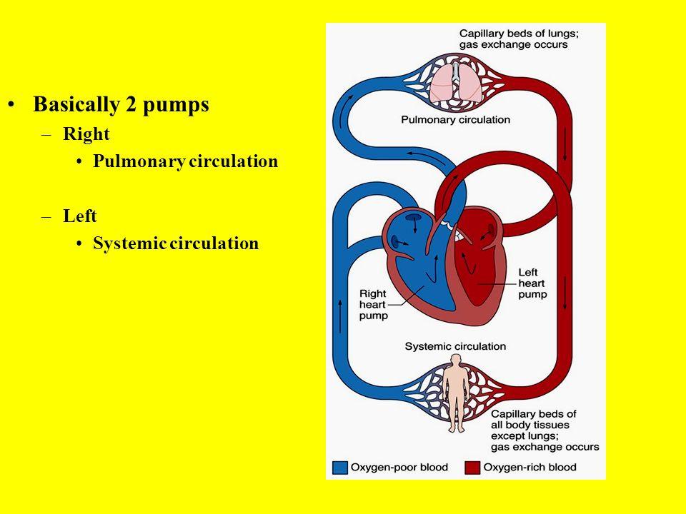 Human Anatomy & Physiology Cardiovascular System Lymphatic System ...