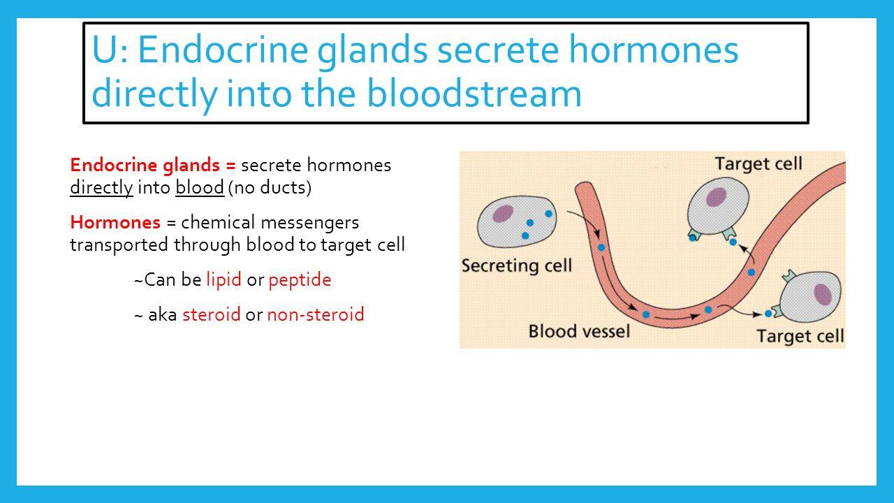 Hormones Metabolism Option D5 Ahl U Endocrine Glands Secrete
