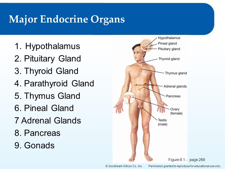 Lesson 8.2 Major Endocrine Organs Chapter 8: The Endocrine System ...