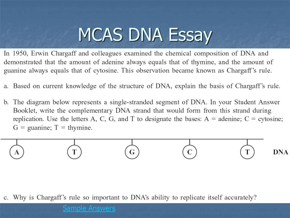 Chapter  What Do You Notice About These Pictures Dna  Rna Dna   Mcas Dna Essay Sample Answers