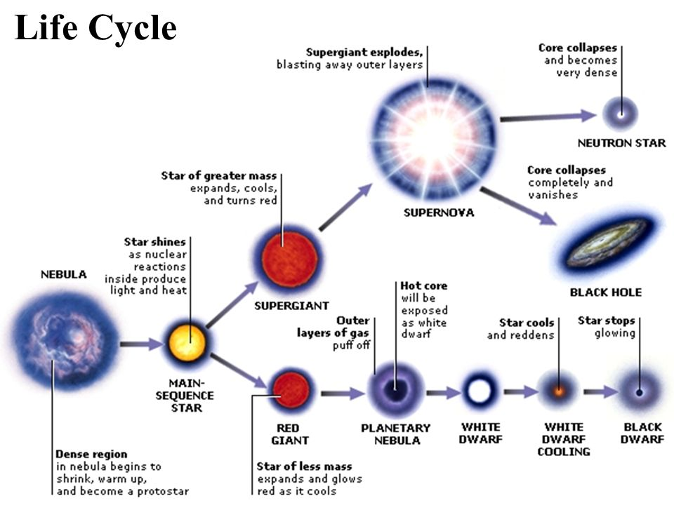 Stellar Evolution Star Life Cycle Basic Structure Mass Governs A