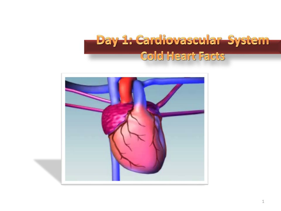 1. Primary Functions 2 The heart is a muscular organ that is ...