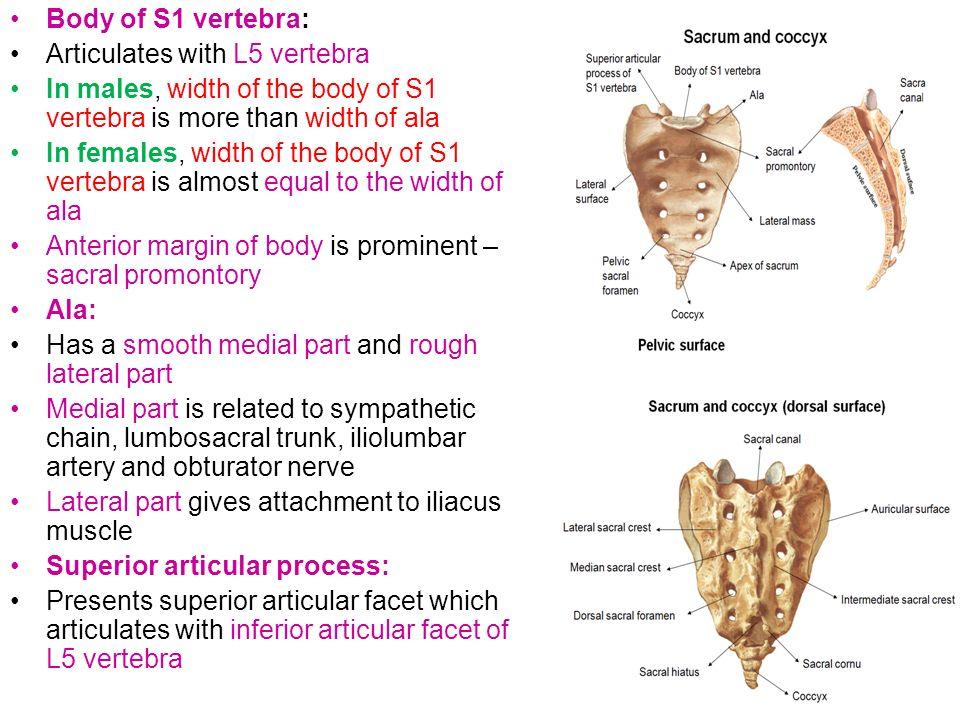 Vertebral Column Dr N Satyanarayana Vertebral Column Made Up Of 33