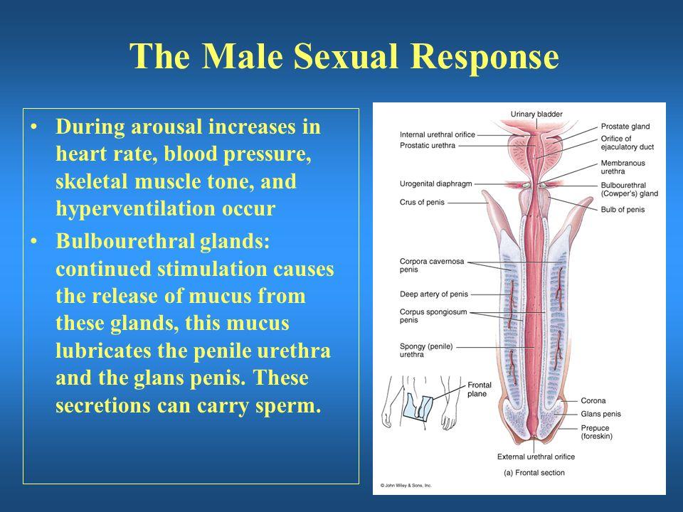 Men's Nipples